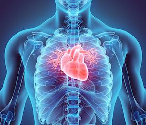 cardiovascular-300.jpg